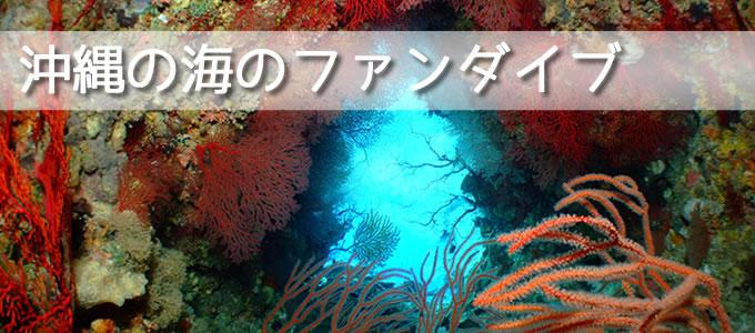 沖縄のファンダイブ
