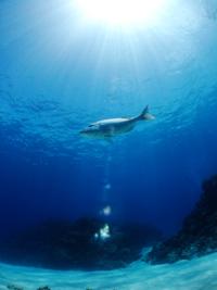 沖縄 慶良間 魚