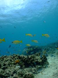 沖縄 真栄田 魚