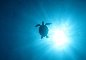 久米島 カメ