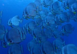 久米島 魚