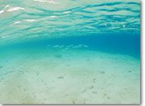 沖縄のビーチ 白砂
