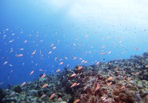 沖縄 ダイビング 糸満 透明度