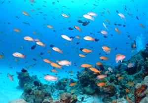 水納島と瀬底島の魚の群れ