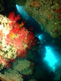 水納島と瀬底島の水中地形