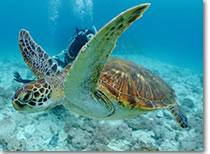 沖縄の阿嘉島ダイビング・イメージ1