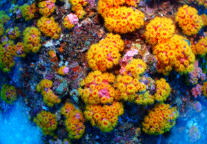 万座の水中は彩り豊か