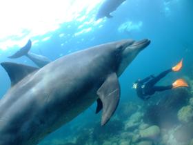 スキンダイビングでイルカと泳ぐ