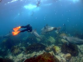 イルカと一緒に泳ごう