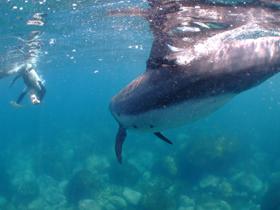 水面からでもドルフィンスイムは楽しめます