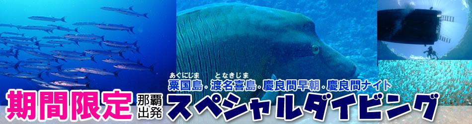 沖縄の期間限定ダイビング