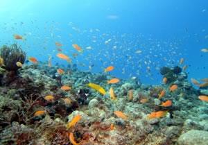 沖縄 ダイビング 糸満 魚影