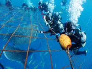 体験ダイビング ジンベエザメ
